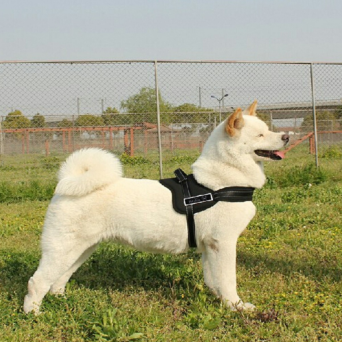 Dog Soft Vest Harness Walk Collar Chest Strap - Black XL